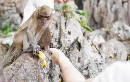 Netter wilder Affe Stockbild