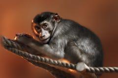 Nettes Affe-Gesicht Lizenzfreie Stockbilder