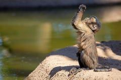 Nettes Affe-Händchenhalten oben Lizenzfreies Stockfoto