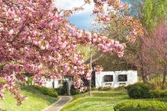Nettes altes Haus mit Blumen Stockfoto