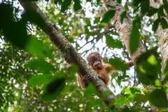 Nettes Baby, das an einem Baum hängt Stockfotografie