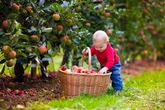 Nettes Baby, das frische Äpfel vom Baum auswählt Lizenzfreies Stockfoto