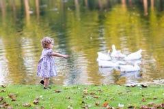 Nettes Baby, das wilde Gänse in einem Herbstpark jagt Stockfotos