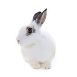 Nettes beschmutztes weißes Kaninchen auf weißem Isolat Stockbilder