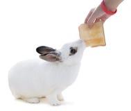 Nettes beschmutztes weißes Kaninchen auf weißem Isolat Dieses versuchen flufly zum Sn Lizenzfreie Stockfotos