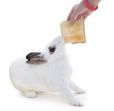 Nettes beschmutztes weißes Kaninchen auf weißem Isolat Dieses versuchen flufly zum Sn stockbild