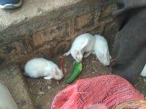 Nettes Bild mit drei Kaninchen lizenzfreie stockbilder