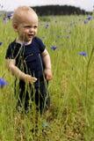 Nettes blondes Baby auf dem Gebiet von Kornblumen Konzept für Landleben Lizenzfreie Stockfotografie