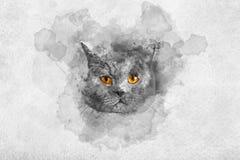 Nettes Britisch Kurzhaar-Katze ` s Aquarellporträt lizenzfreie stockfotos