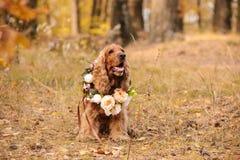 Nettes Cocker spaniel mit Blättern und Blumen im Herbst Stockfotografie