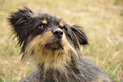 Nettes dog2 Stockbild