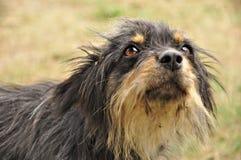 Nettes dog3 Stockbilder