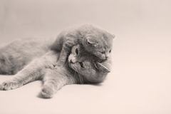 Nettes eben getragenes Kätzchen stockbilder