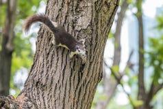 Nettes Eichhörnchen Stockbilder