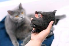 Nettes eines-Tag-alt Kätzchen Lizenzfreies Stockfoto