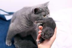 Nettes eines-Tag-alt Kätzchen Lizenzfreies Stockbild