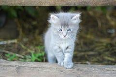 Nettes erschrockenes gestreiftes graues Kätzchen versteckt sich unter dem Portal lizenzfreies stockbild