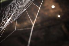 Nettes farbiges Spinnennetz Lizenzfreie Stockfotos