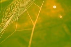 Nettes farbiges Spinnennetz Lizenzfreie Stockbilder