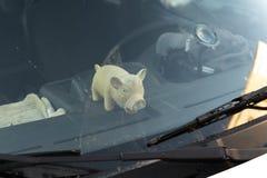 Nettes fettes Schweinspielzeug hinter Windschutzscheibenfenster eines Autos stockfoto