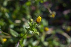 Nettes gelbes Mehl Stockbild