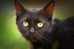 Nettes Gesicht der schwarzen Katze Stockfoto