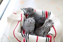 Nettes Gesicht, eben getragene Kätzchen, die oben schauen stockbild