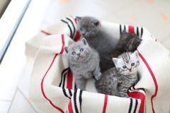 Nettes Gesicht, eben getragene Kätzchen, die oben schauen stockbilder
