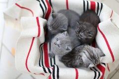 Nettes Gesicht, eben getragene Kätzchen, die oben schauen lizenzfreies stockfoto