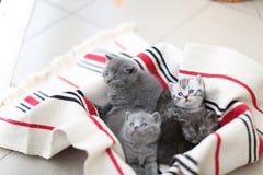 Nettes Gesicht, eben getragene Kätzchen, die oben schauen stockfotos