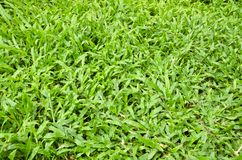 Nettes Gras lizenzfreies stockbild