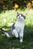 Nettes grau-weißes Kätzchen, das auf dem Gras sitzt Stockbilder