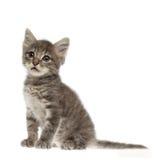 Nettes graues Kätzchen auf weißem Hintergrund stockbild