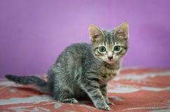 Nettes graues Kätzchen, das auf dem Sofa sitzt stockbilder
