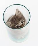 Nettes graues Kätzchen in einem Glas lizenzfreie stockfotos