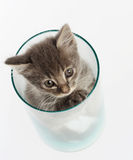 Nettes graues Kätzchen in einem Glas stockfotografie