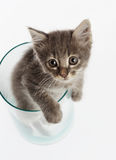Nettes graues Kätzchen in einem Glas lizenzfreie stockbilder