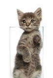 Nettes graues Kätzchen in einem Glas lizenzfreies stockfoto