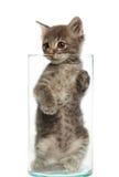 Nettes graues Kätzchen in einem Glas stockfotos