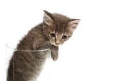 Nettes graues Kätzchen in einem Glas lizenzfreies stockbild