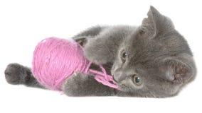Nettes graues shorthair Kätzchen legen und Spiele mit dem Ball des Garns lokalisiert lizenzfreie stockfotografie