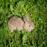 Nettes Häschen, das ruhig im Gras sitzt Lizenzfreies Stockbild