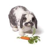 Nettes Häschen-Kaninchen, das Karotte und Grüns isst lizenzfreies stockbild