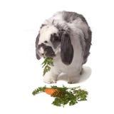 Nettes Häschen-Kaninchen, das Karotte und Grüns isst lizenzfreie stockfotografie