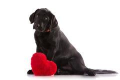 Nettes Hündchen mit einem roten Herzen stockfoto