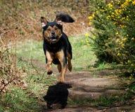 Nettes Hansome, welches das Hundespringen schaut Lizenzfreies Stockbild
