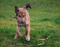 Nettes Hundespielen Stockfotografie