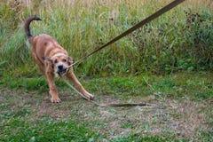 Nettes Hundespielen Lizenzfreies Stockbild