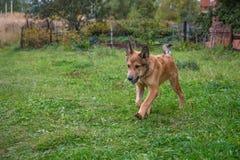 Nettes Hundespielen Lizenzfreie Stockbilder