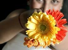 Nettes indisches Mädchen mit Blumen Stockbilder
